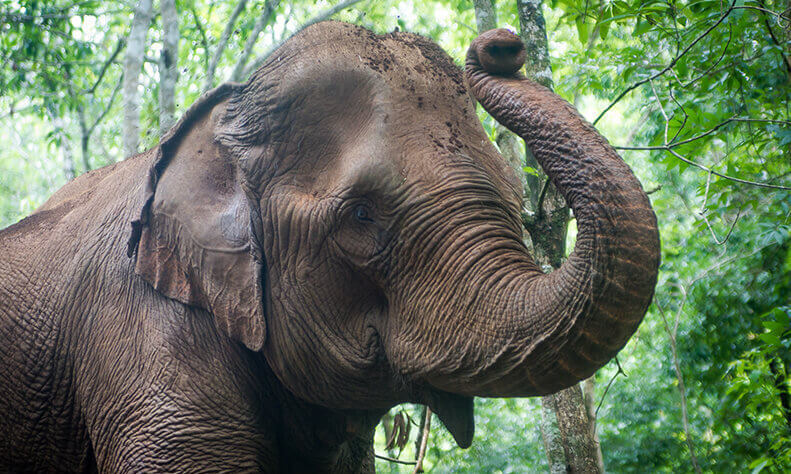 Cambodia Elephant Sanctuary Volunteering Online Fundraiser!