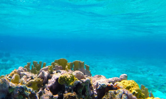 Marine Conservation in the Turks & Caicos