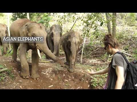 Helping Elephants in Thailand