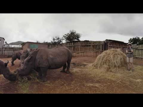 Help Jak save the Rhinos!